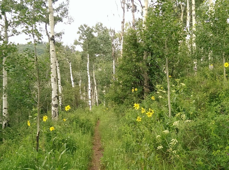 The grasses and wildflowers start to encroach a bit on the trail