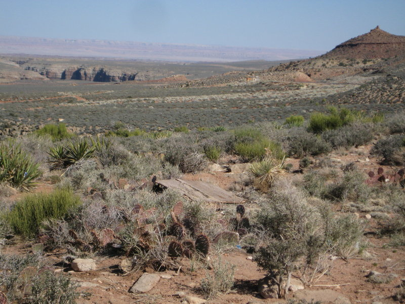 Navajo Mountain in the distance with painted desert
