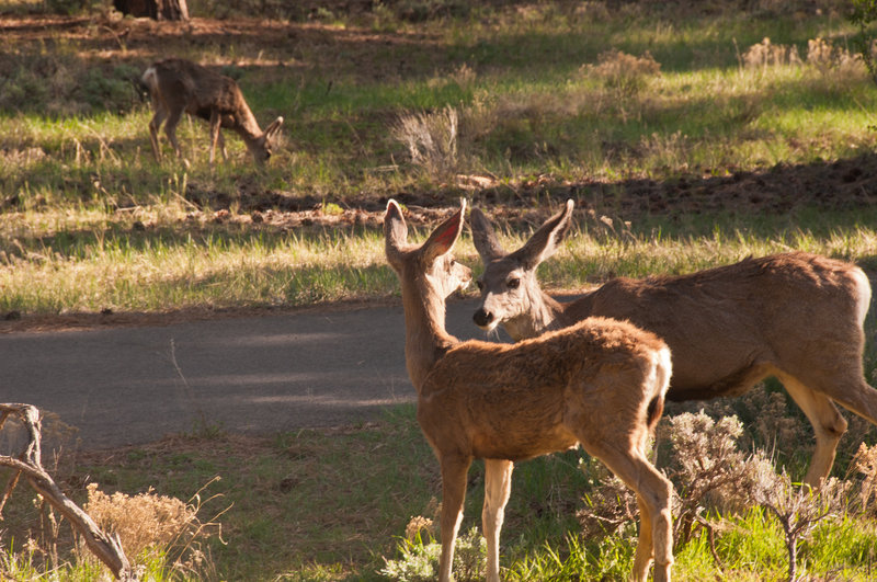 The local residents along the Village Greenway