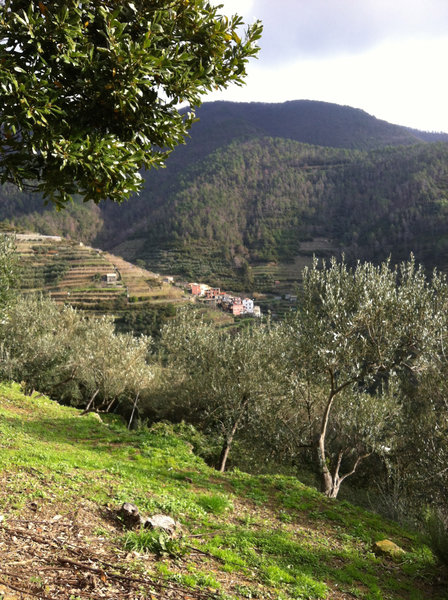 View of Groppo through the olive trees