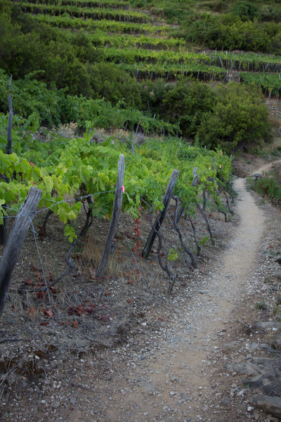 Vineyards along the trail