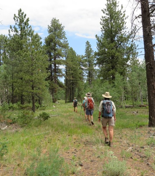 Blue sky, friends to hike with and a pretty pine forest. Gotta love Colorado!