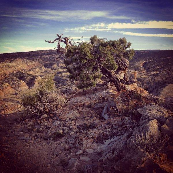 Eagle's Nest summit tree.
