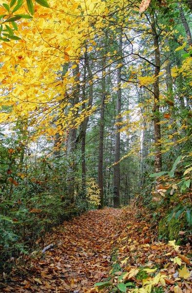 Autumn along Swift Camp Creek Trail