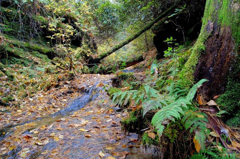 Crossing Bearpen Branch on the Swift Camp Creek Trail