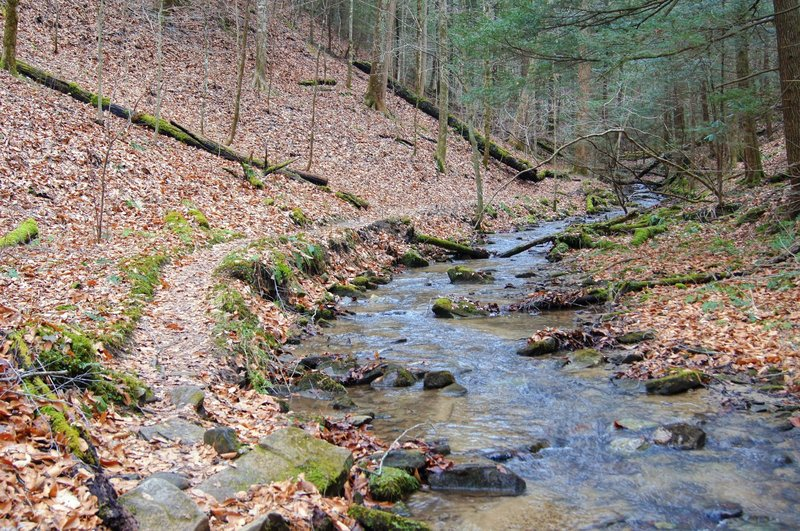 Auxier Branch Trail alongside its namesake