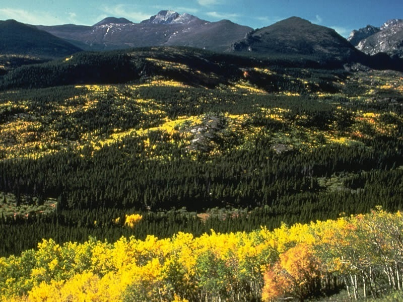 Aspen on Bierstadt Moraine (photo by Rocky Mountain National Park)