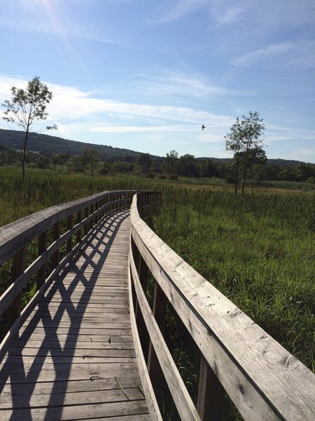 "Boardwalk over ""The great swamp"""