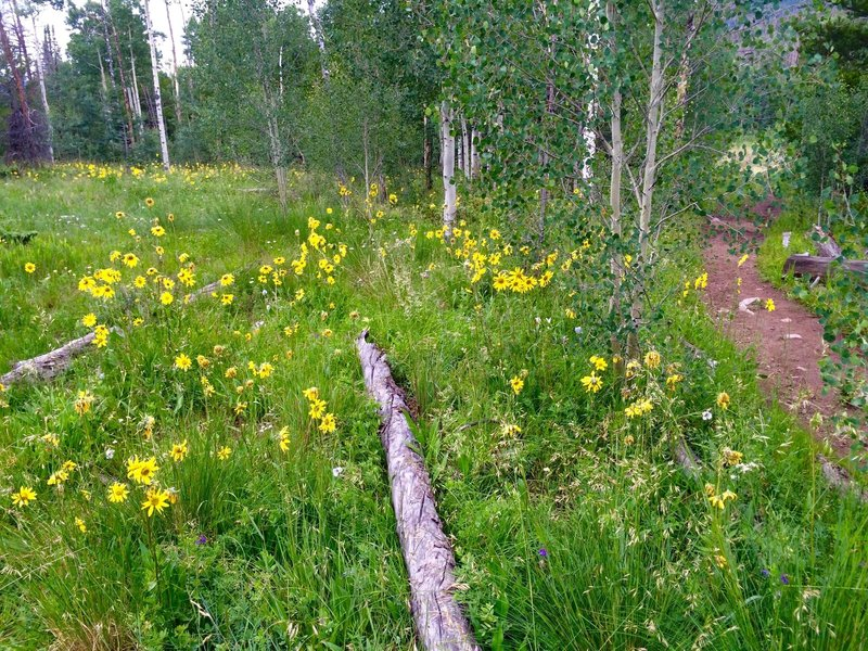 Lovely aspen forest after the initial difficult, steep stretch of trail