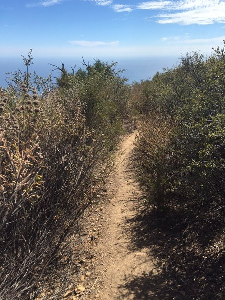 Trespass Trail being engulfed by scrub brush.