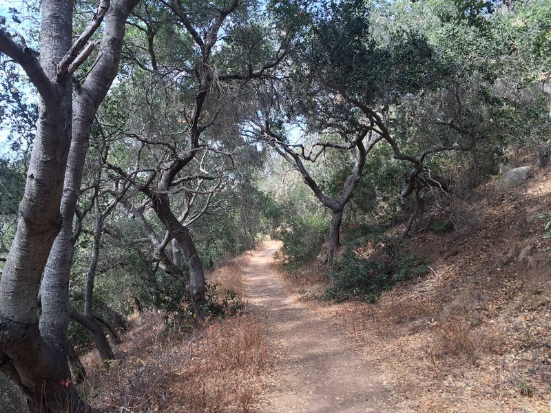 A rare canopied section of the Trespass Trail.