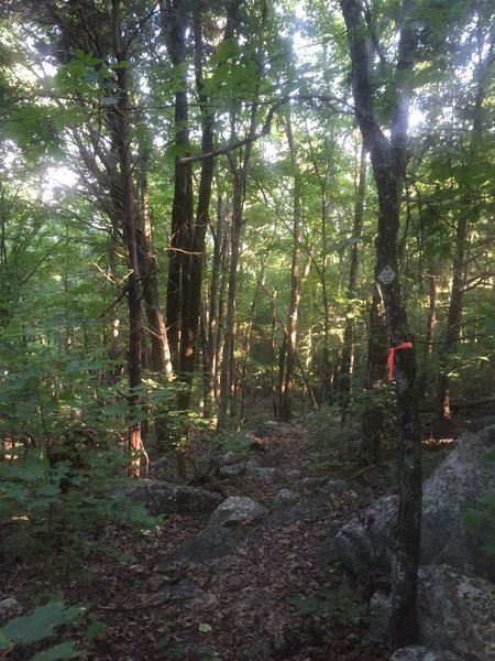 Hard to follow section between Bankhead Parkway and Flat Rock of the Land Trust's Panther Knob trail.