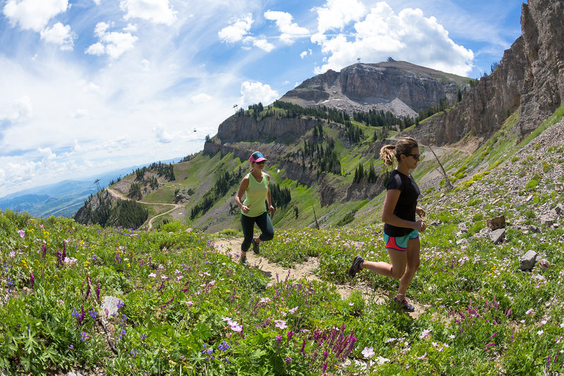 Wildflowers popping on Cirque Trail with Rendezvous Mountain summit in the background. Photo by Patrick Nelson / Jackson Hole Mountain Resort