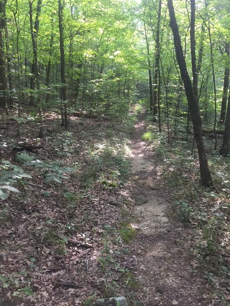 Singletrack section on the Rock Wall trail