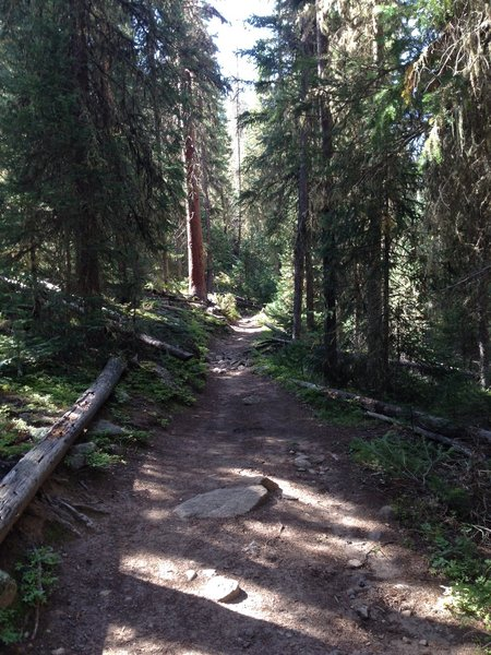Cascade Trail just past Monarch Lake