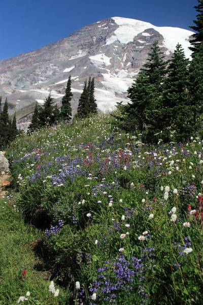 Field of flowers heading up to Panorama Point (photo by Frank Kovalchek)