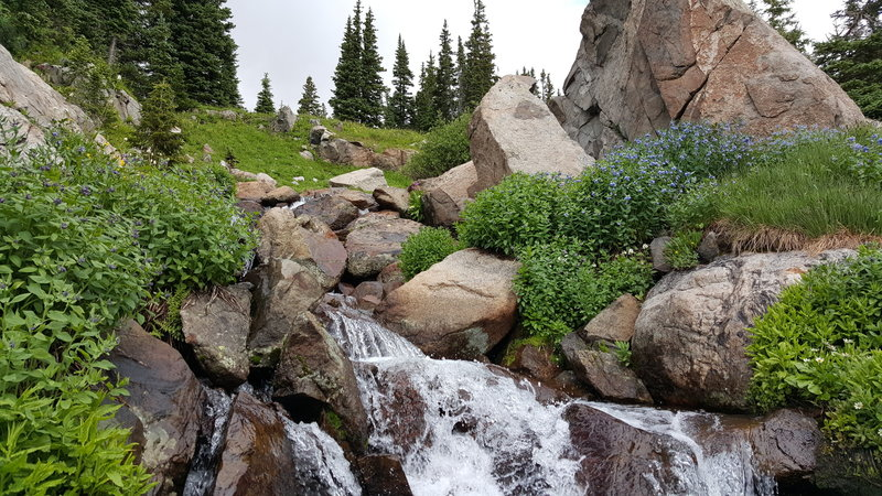 Wildflowers around a small waterfall