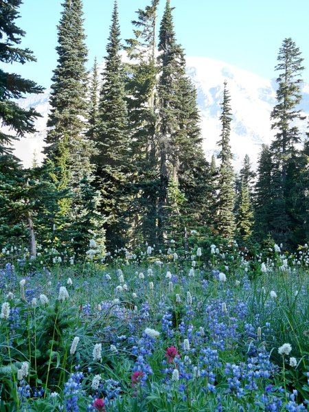 Mount Rainer wildflowers