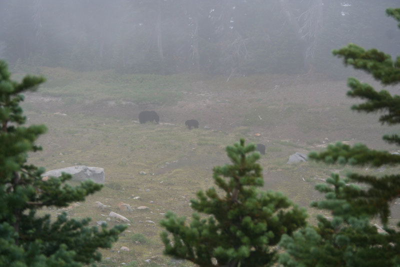 Two bears as seen from the Dead Horse Creek Trail (photo by Kat Kellner)