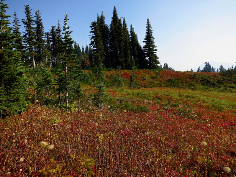 Mazama Ridge meadow ablaze with color (photo by Steve Cyr)