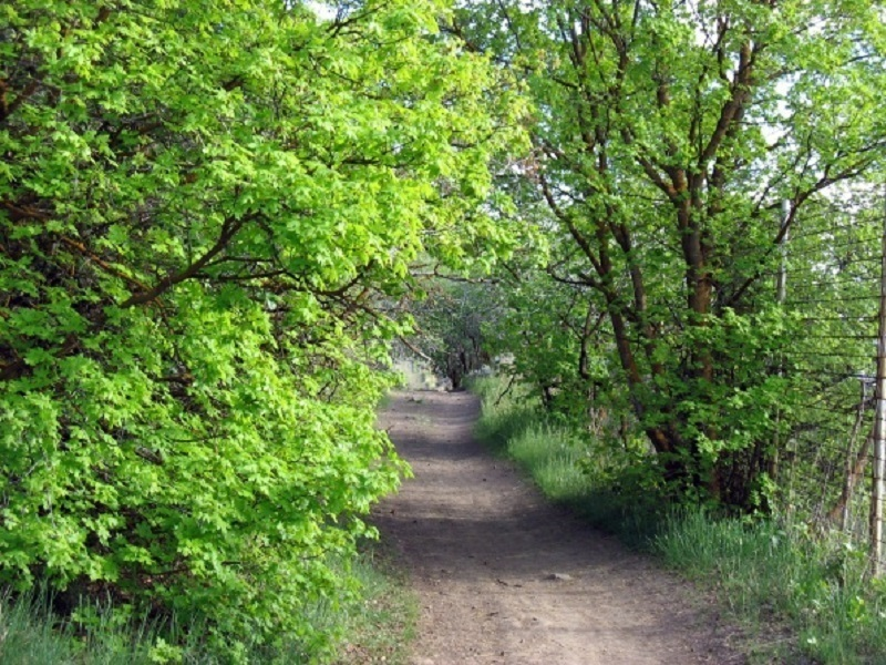 A beautiful section of trail through some trees, especially in early summer or late fall