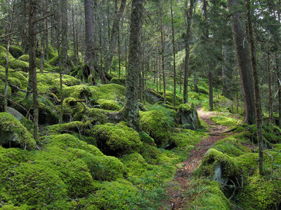 Hiking Trails near Great Smoky Mountains National Park