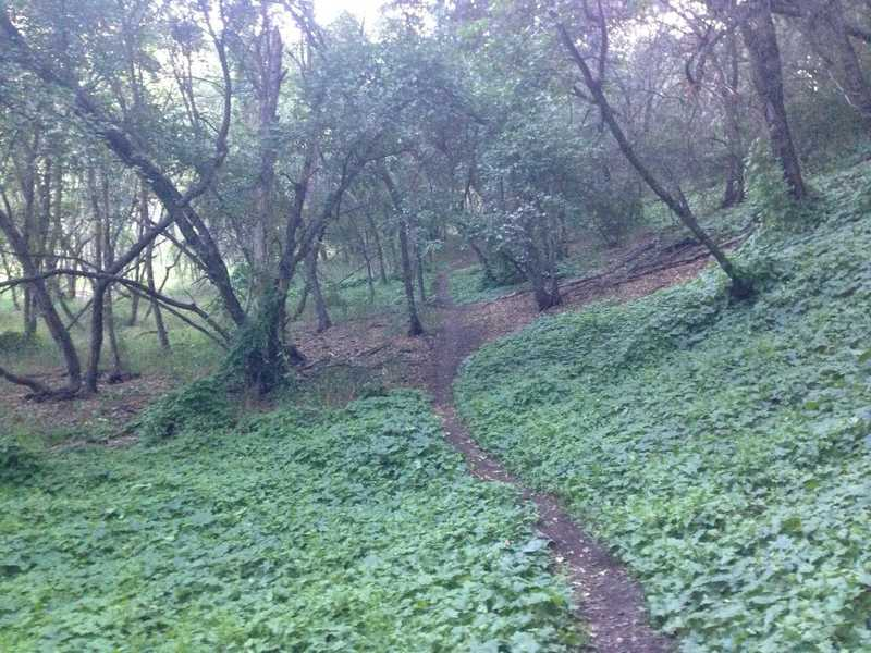 A lush section of the singletrack trail