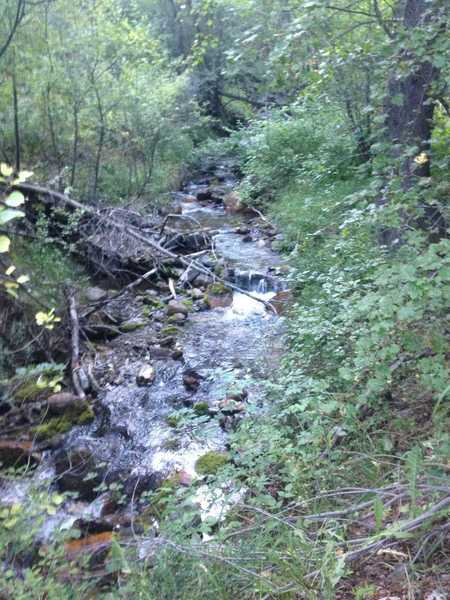 A view of Birch Creek rambling over rocks and fallen trees