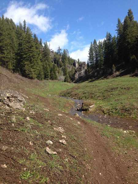 A view of the trail as it meanders through the meadow by the stream