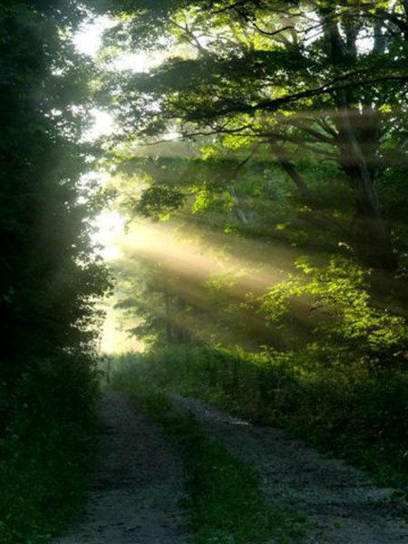 Sunrise on the Bruce Trail