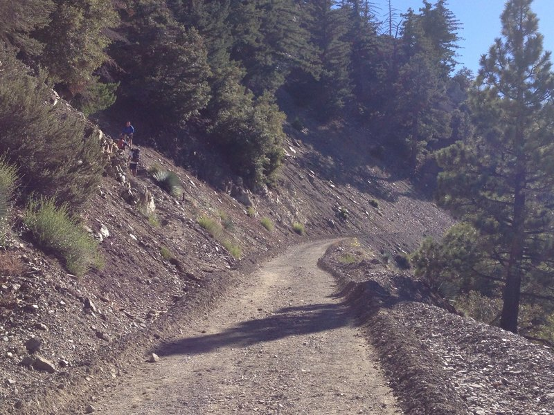 This is where the trail to the summit breaks off from the fire road (on the left) - it's easy to miss!