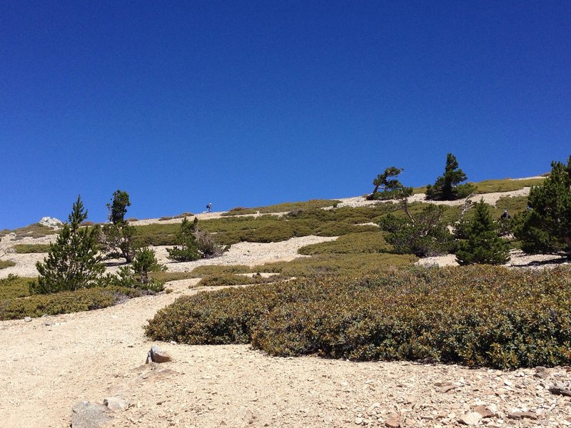 Final rise to the summit - social trails again here.
