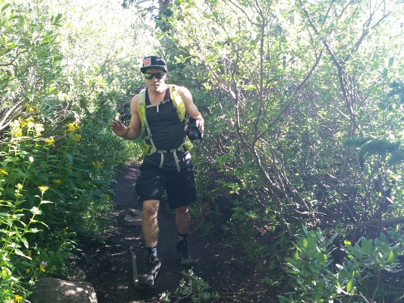 The trail gets tight in the bushes in multiple spots.