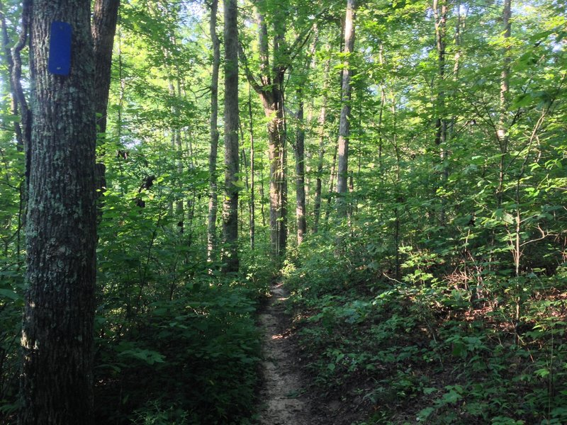 At mile 1.3, the trails narrows down to singletrack