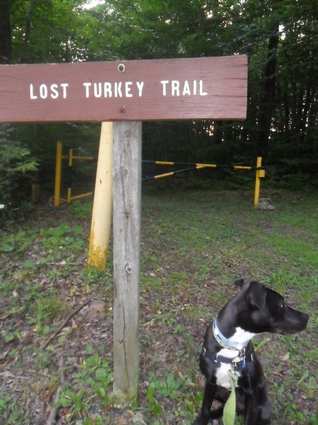 The early section of Lost Turkey Trail alternates between singletrack and doubletrack.  Here, the trail crosses Pot Ridge Road.  Runners pass through gates on either side of the road.