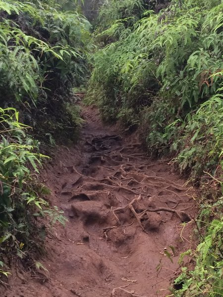 Footing can be tough with roots and mud