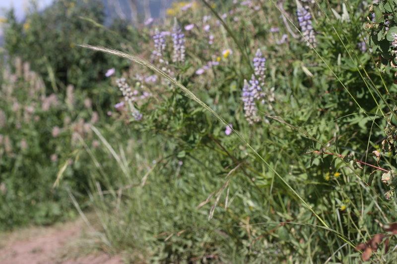 Wildflowers along Lambs Canyon Trail