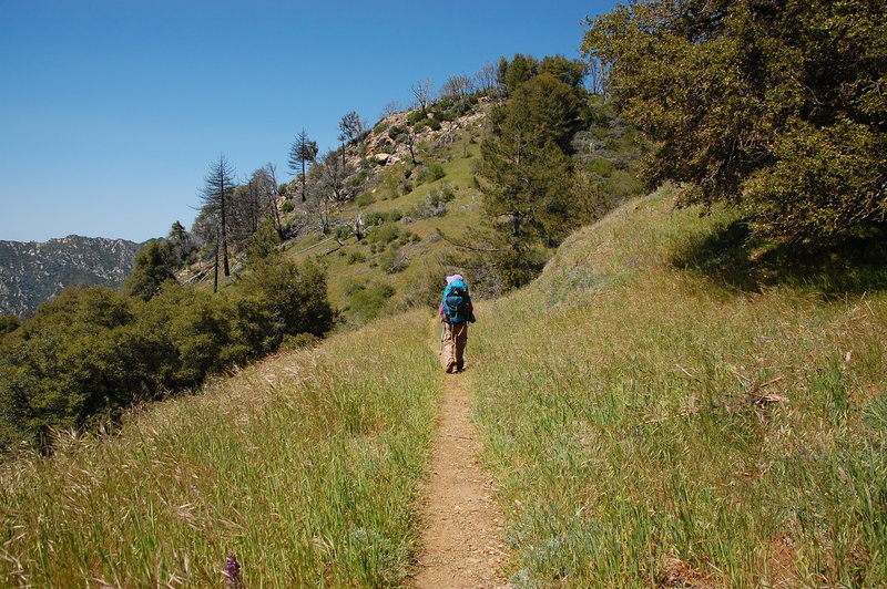 Backpacking along the Pine Ridge Trail