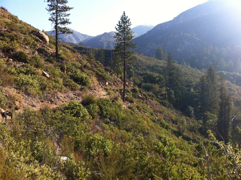 Pine Ridge Trail above Sykes
