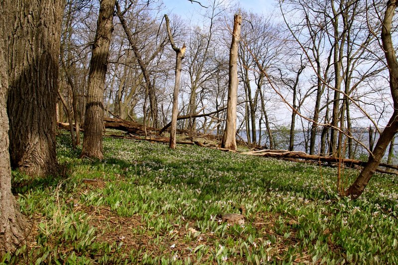Picnic Point on an early spring day.