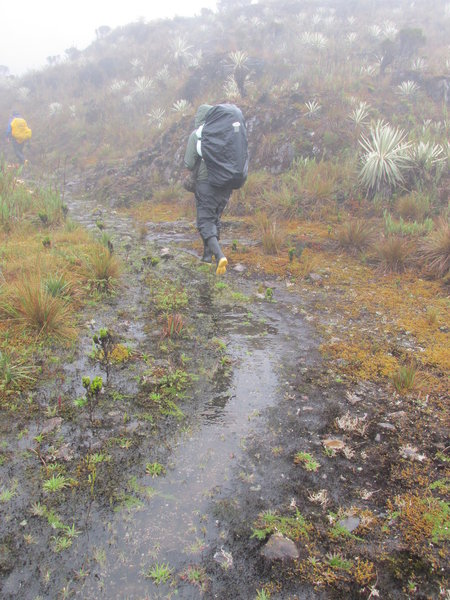 Crossing the paramo ecosystem, surrounded by the frailejons