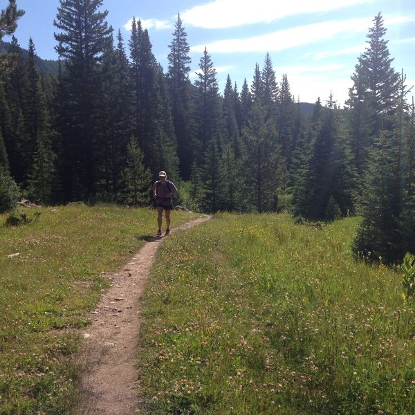 Great running on the Timberline Lake Trail
