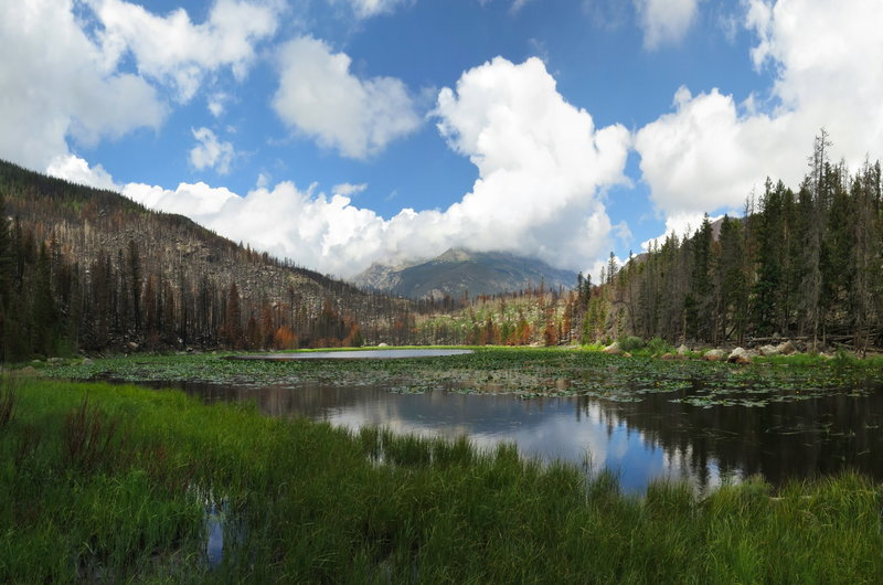 Cub Lake after the Fire