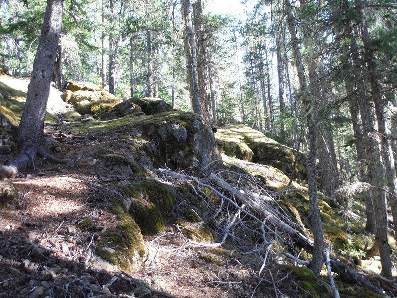 Trail gets a bit rougher higher up. Grade is still fairly mellow though.