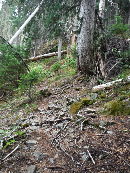 The trail gets progressively rougher as you get closer to the top while continuing to switchback.