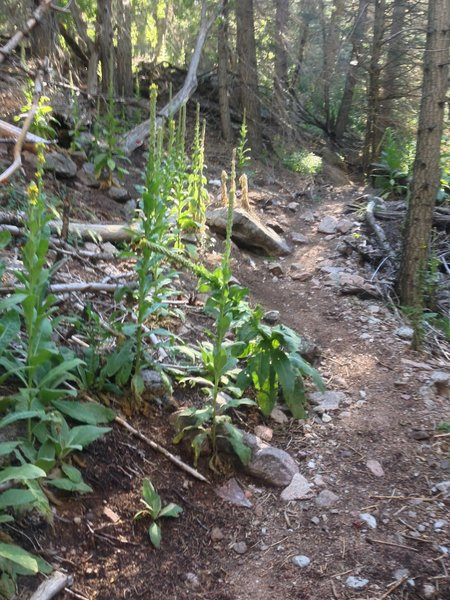 Foliage along the trail.