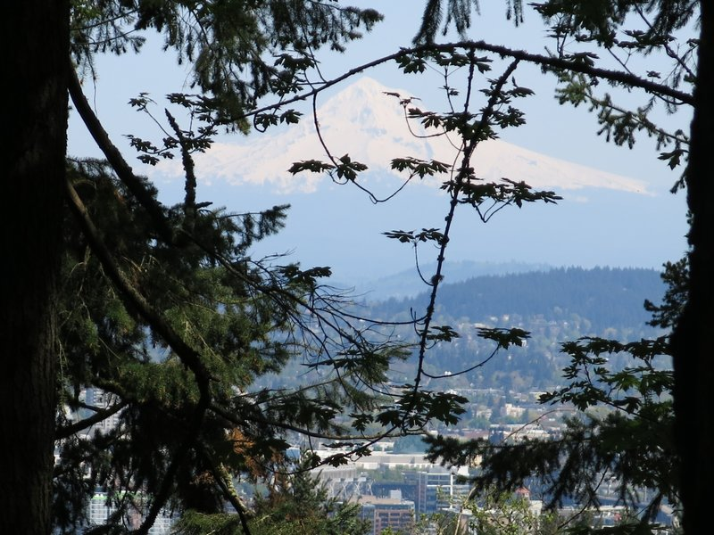 View of Mt Hood