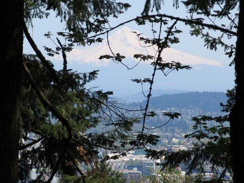 View of Mt Hood