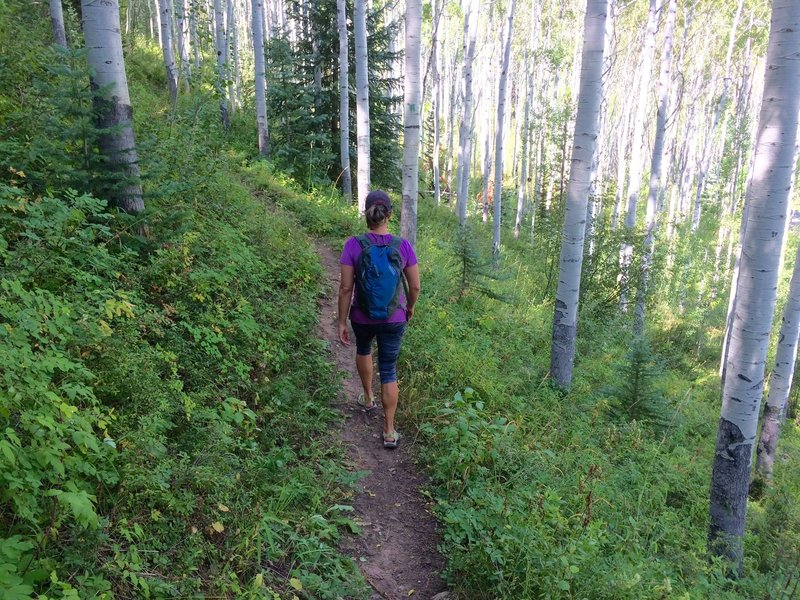 The lovely aspen forests of Vail