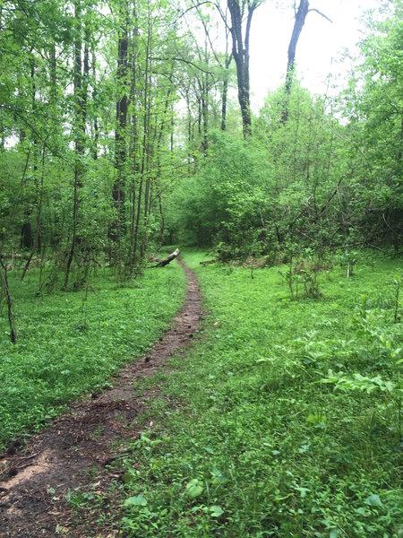 Beautiful singletrack in spring along the Oconee Trial